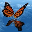 The butterfly - Stock Photo