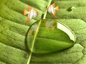 Two goldfish on leaf — Stock Photo