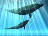 Whales in water — Stock Photo