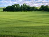 Groen veld en bomen — Stockfoto