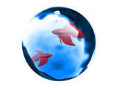 Fishes in a bubble — Stock Photo