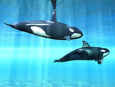 Killer whale — Stock Photo