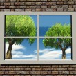 Trees and nature through the window — Stock Photo