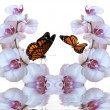 Orchids with butterfly — Stock Photo