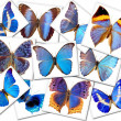 The butterflys — Stock Photo