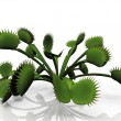 Stock Photo: Venus flytrap