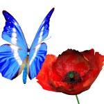 Butterfly on poppy blossom — Stock Photo