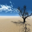 Dry tree in desert - Stock Photo