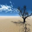 suche drzewo pustyni — Zdjęcie stockowe
