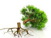 A tree — Stock Photo