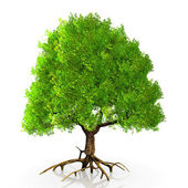 A tree — Stock Photo