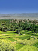 A green oasis in Morocco — Stock Photo