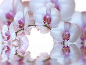 Orchids and reflection in the water — Stock Photo