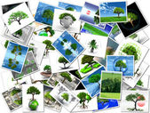 The pictures of my trees — Stock Photo