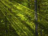 Zonlicht in het groene bos — Stockfoto