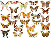 Collection of colored butterflies — 图库照片