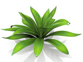Green house plant — Stock Photo