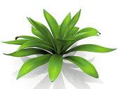 Green house plant — Stock Photo