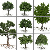 Collage of trees — Stock Photo