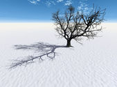 Bare tree covered in snow — Stockfoto