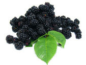 Freshly picked blackberries — Stock Photo