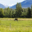 American Farm in Alaska — Stock Photo