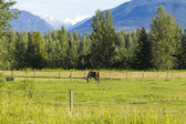 американский ферма на аляске — Стоковое фото