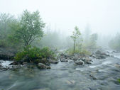 Water stream in the fog — Stockfoto