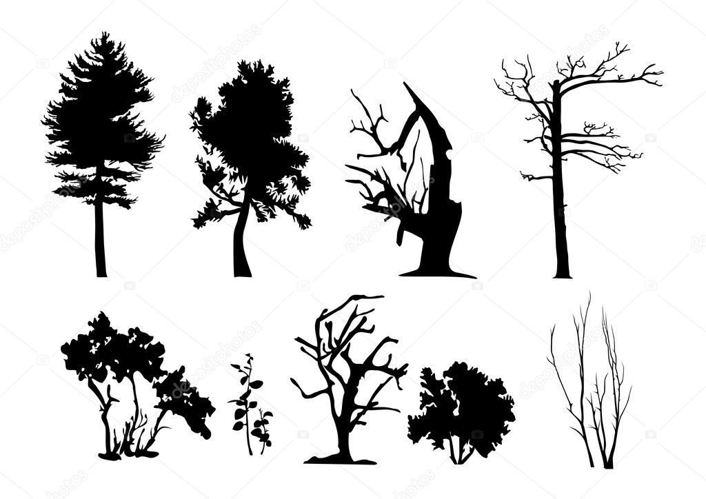Tree Plan Vector Tree Vector Silhouettes Set