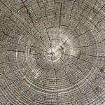 Concentric circles — Stock Photo