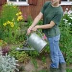 Gardening — Stock Photo #6710992