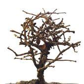 Dried tree — Stock Photo