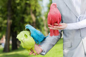 Wedding pigeons in the hands — Stock Photo