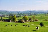 Anglická pole na jaře — Stock fotografie