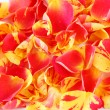 Royalty-Free Stock Photo: Rose petals
