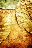 Grunge plant background — Stock Photo