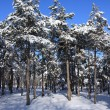 Winter snow covered trees  — Stock Photo #6648627