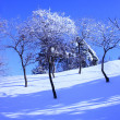 Winter snow covered trees — Stock Photo #6648635