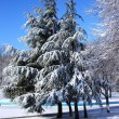 Winter snow covered trees — Stock Photo