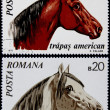 Post stamp shows horses — Stock Photo