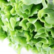Fresh greens — Stock Photo