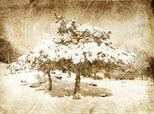 Jedle pokryté sněhem — Stock fotografie