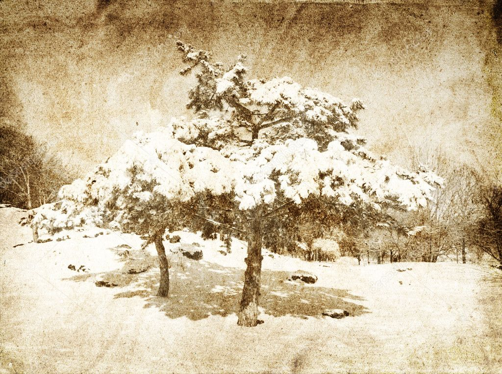 Fir trees covered with snow.Photo in vintage image style. — Stock Photo #6697584