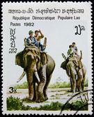 On elephants — Stock Photo