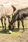 Mule grass picks — Stock Photo