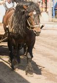 Häst i sele — Stockfoto