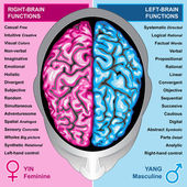 Human brain left and right functions — Photo