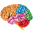 Human brain lateral view — Stock Vector