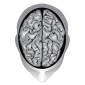 Human brain top view — Stock Vector