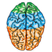 Human brain top view — Stock vektor